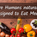 Are humans vegetarians?